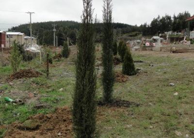 2014-7-25-Cementerio-plantación-arbolitos-1