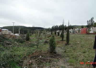 2014-7-25-Cementerio-plantación-arbolitos-7